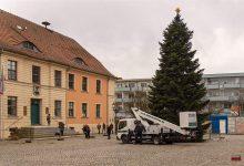 Photo of Bernau und Biesenthal erhalten heute ihre Weihnachtsbäume