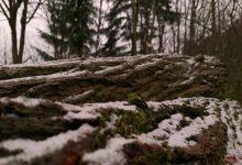 Photo of Mit örtlichem Schneeregen starten wir in den heutigen Donnerstag