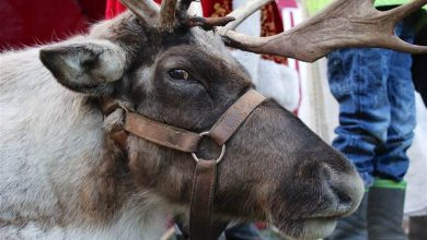 Photo of Bernau LIVE wünscht allen einen schönen 1. Advent