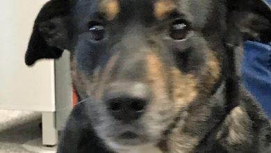 Photo of Veterinäramt bittet um Mithilfe – Hund im Wald einfach an Baum gebunden