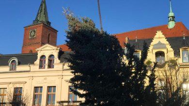 Photo of Weihnachtsbaum-Abbau – Parkverbot auf dem Marktplatz in Bernau