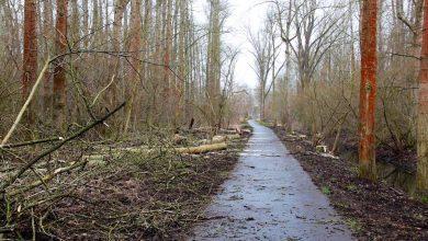Photo of Radweg in Bernau wurde von losen Ästen und morschen Bäumen befreit