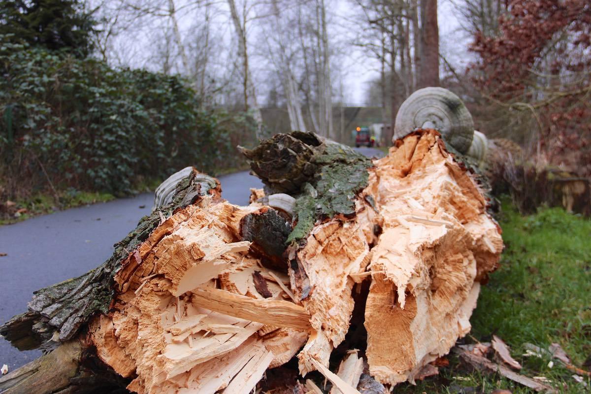 Forstarbeiten 2 © Bernau LIVE
