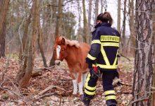 Photo of Angebundene Pferde sorgten für einen Einsatz der Feuerwehr Bernau
