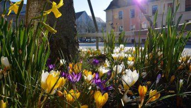 Photo of Infos und Hinweise der Stadt Bernau für das bevorstehende Wochenende