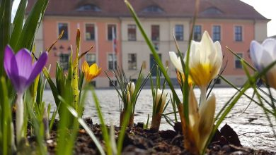 Photo of Guten Morgen aus Bernau und willkommen in der Sommerzeit