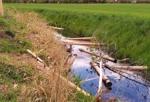 Photo of Bernau: Zahlreiche junge Bäume herausgerissen – Wer macht so etwas?