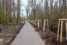 Photo of Tausend Bäume für Bernau – Pflanzungen werden fortgeführt