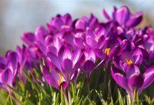 Photo of Guten Morgen am 1. April und allen einen schönen Mittwoch