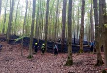 Photo of Einsatz der Feuerwehren Bernau – Waldbrand bei Lobetal