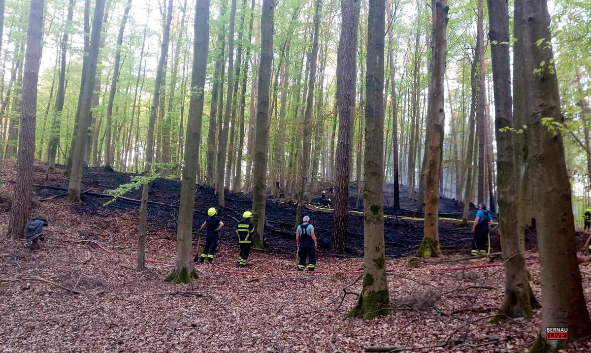 Waldbrand bei Lobetal0000 1