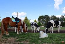 Photo of Bernau: Bitte nicht füttern – wenn Tierliebe zur Gefahr wird