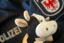 Photo of Bernau: Herrenlose Plüschkuh in Polizei-Gewahrsam genommen