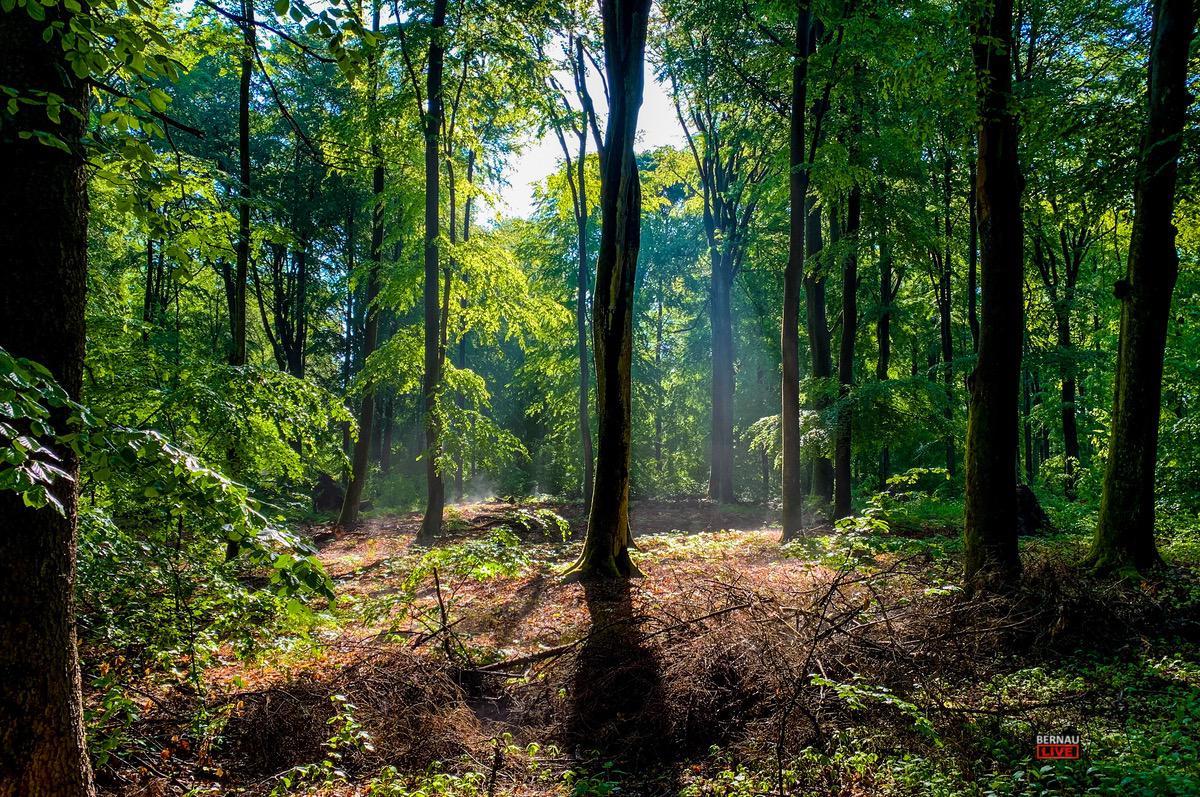 Bernau, Wald, Liepnitzwald
